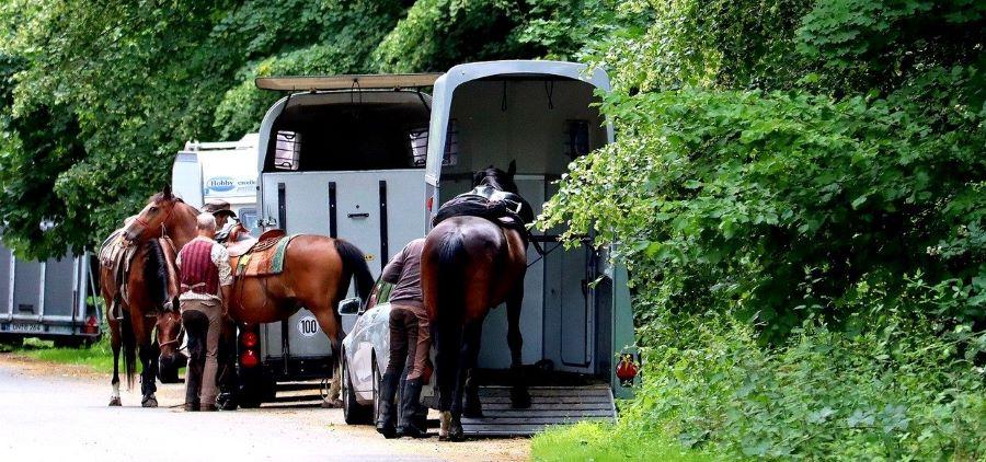 Sicherheit beim Transport von Pferden