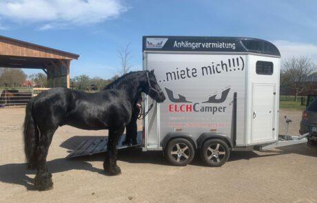 Pferd steht vor Pferdeanhänger mit Sattelkammer
